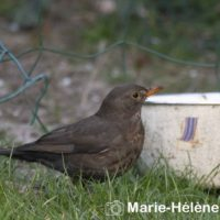 2020 03 27 Oiseaux la Frette 5019 tag